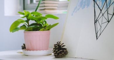 une plante de bureau