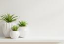décoration plante